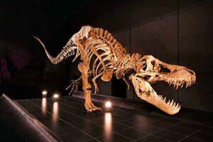 Tyrannosaurus rex en dinópolis