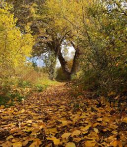 otoño en alcalá de la selva