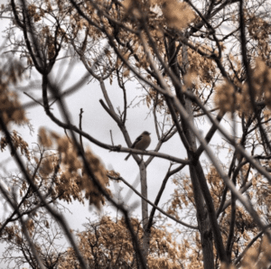 ave del bajo aragon