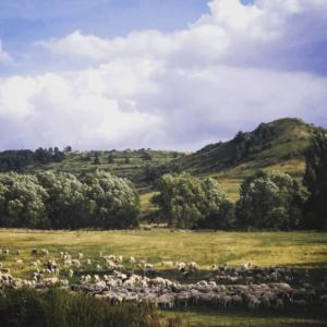 paisaje gudar javalambre con ovejas