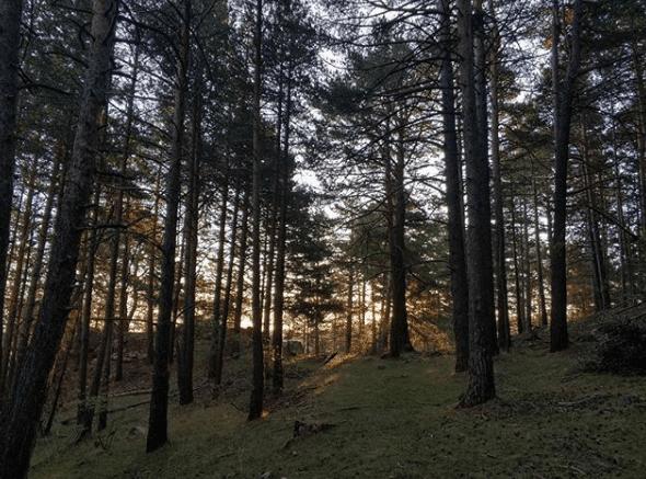 pinos de puertomingalvo