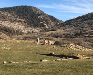 paisaje maestrazgo con vacas