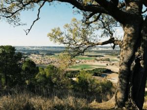 pino de la atalaya