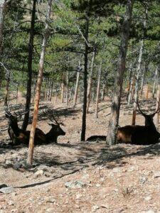 ciervos descansando en el parque La Maleza